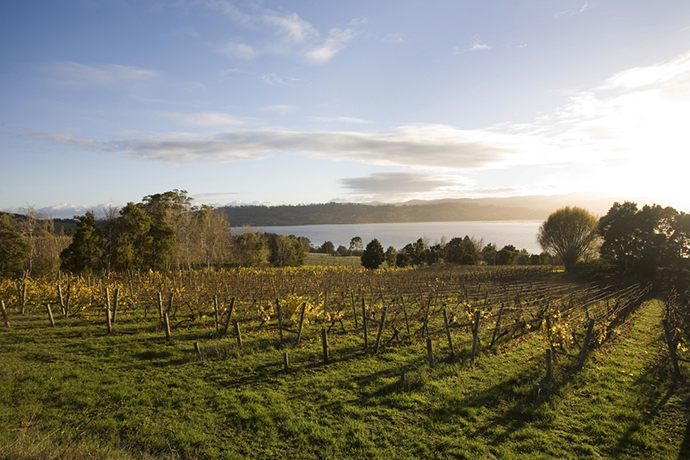 Things To Do In Tasmania - Tamar Valley