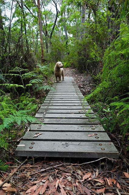 Australia's Best Pet-Friendly Destinations