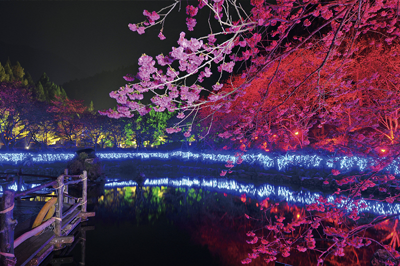 Illuminated cherry blossoms at night at Formosan Aboriginal Culture Village, Taipei Taiwan