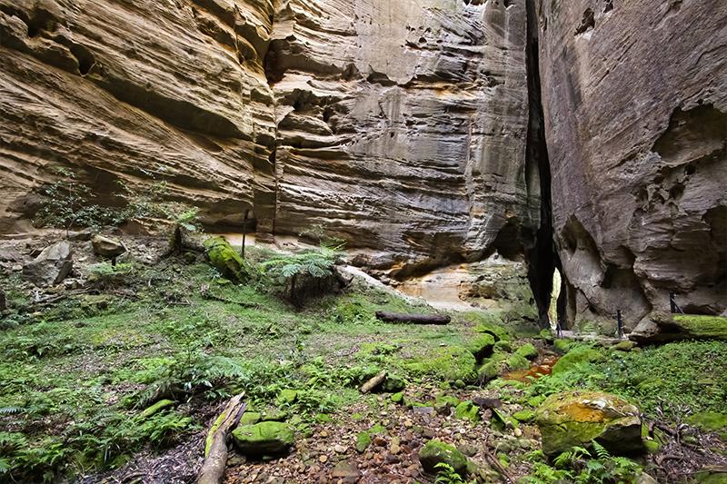 Carnarvon Gorge, Great Inland Way - Best Australian roadtrips