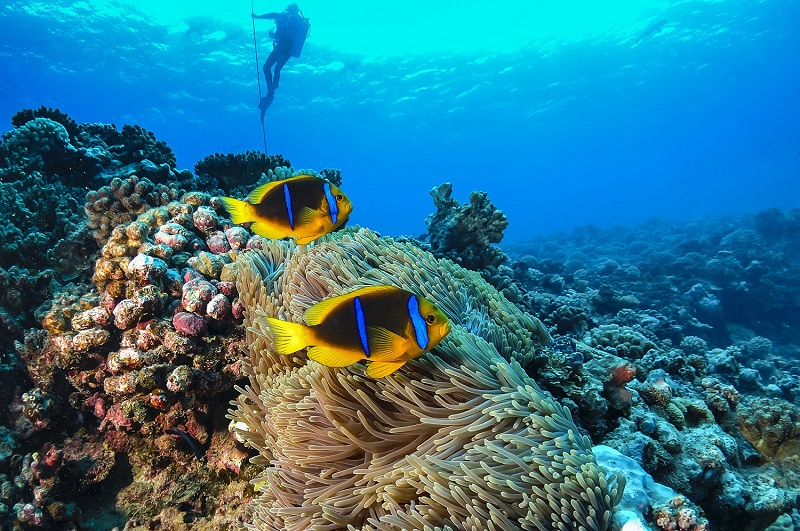 Visit Tahiti - The Best Things To Do In Bora Bora & French Polynesia - Snorkelling and Diving
