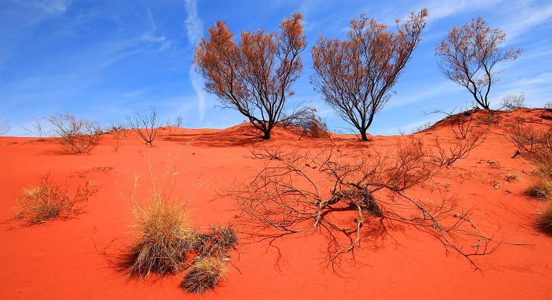 Big Red Sand Dune - Outback Road Trips