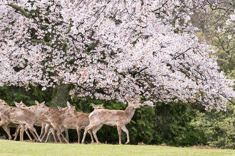 The Best Cherry Blossom Locations In Japan South Korea And Taiwan