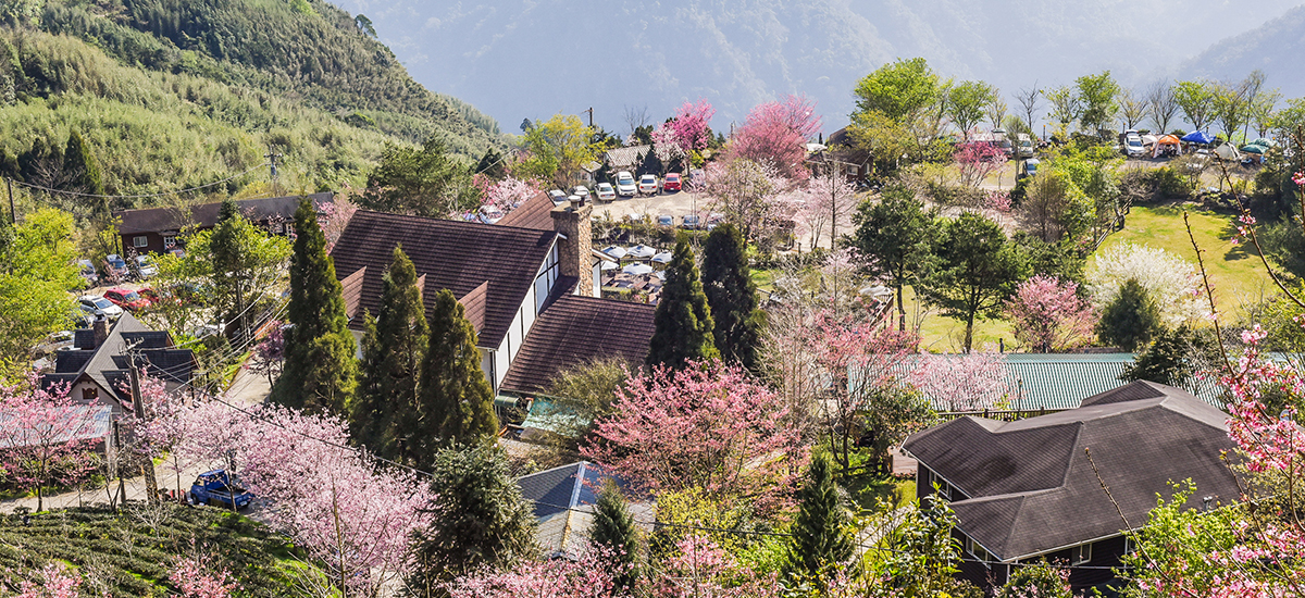 Handpicked by our editors, the best Cherry Blossom Locations in Japan, South Korea, and Taiwan
