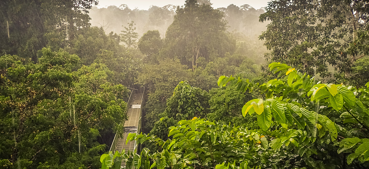 Rainforests around the world: From Tibet to Mexico and Madagascar, which spot tops your bucket list?