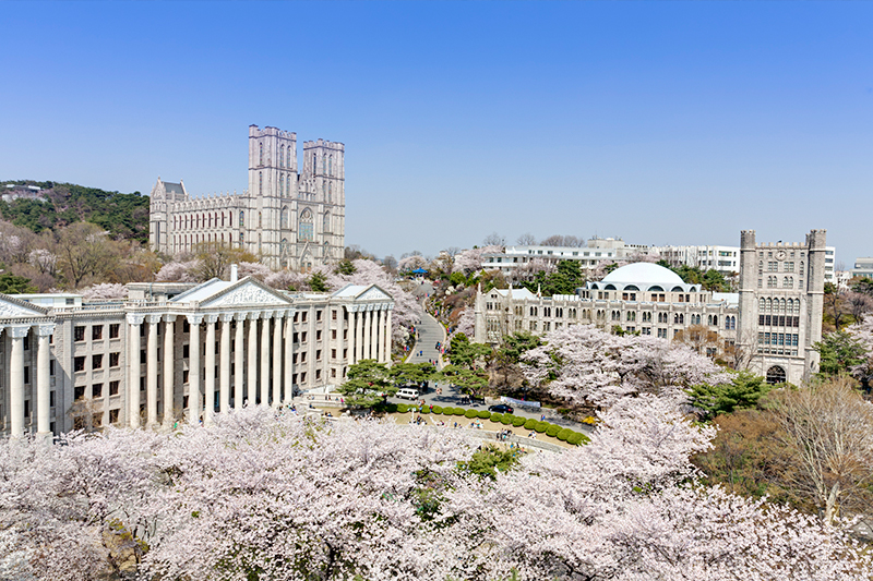 Cherry blossoms at Kyung Hee University, Seoul