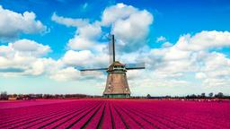 Find cheap flights from Coolangatta to the Netherlands