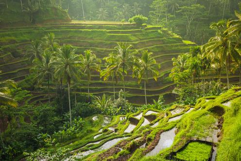 Deals for Hotels in Ubud