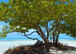 Albury Court Hotel - Key West - Key West - Beach
